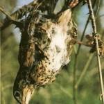 Parany: una modadlidad de caza inaceptable