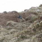 Grave amenaza al Parque Nacional de los Tatras