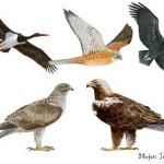 Madrid a la cola de la protección de especies