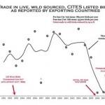 El comercio de aves silvestres cae en picado