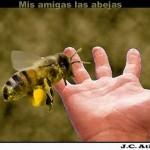 ¿Dónde están mis abejas? ¿Dónde está mi futuro?