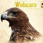 Webcam Águila Imperial