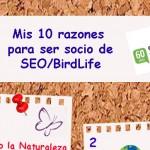 Mis 10 razones para ser de SEO/BirdLife