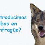 ¿Reintroducimos lobos en Monfragüe?