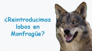 Lobo en Monfragüe